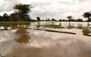 water damage remediation